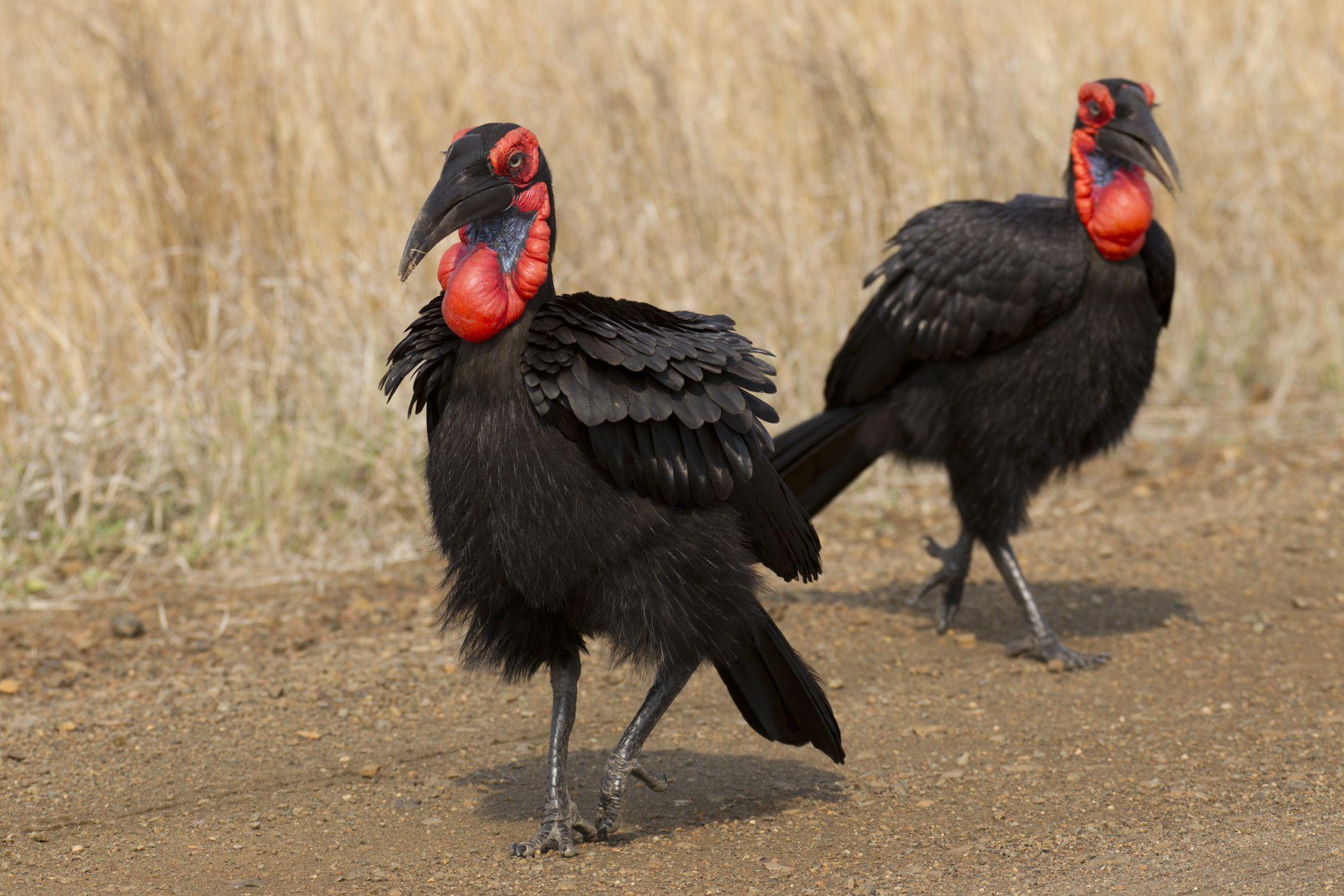 Velké ptáky polykají