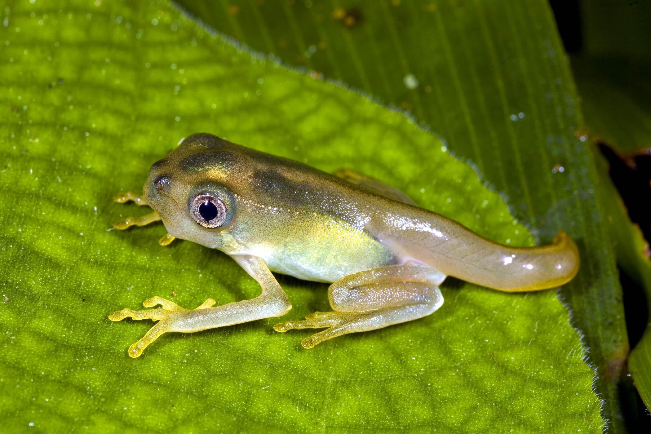 Helping tadpoles grow up into gardeners friends